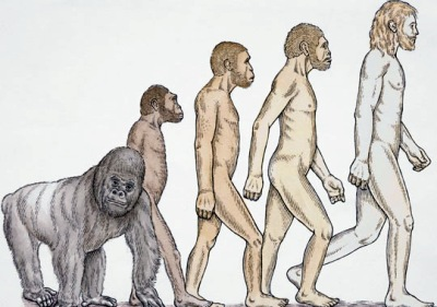 Early Humans Evolution evolution